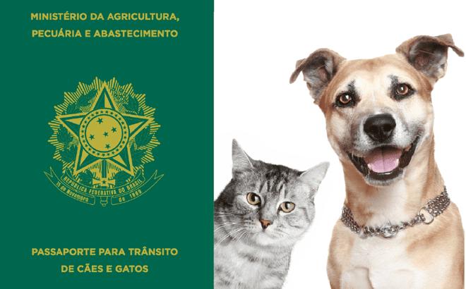 Curiosidades de viagem: Passaporte para caes e gatos